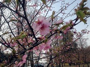 2015-03-23 お出掛け公園03.JPG